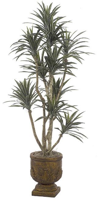 6 Foot Dracaena Warneckii Tree