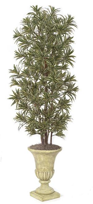 7 Foot Dracaena Reflexa Tree - Green/White or Green/Yellow