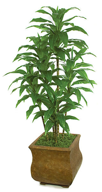 72 Inch Soft Touch Dracaena Cluster x 5