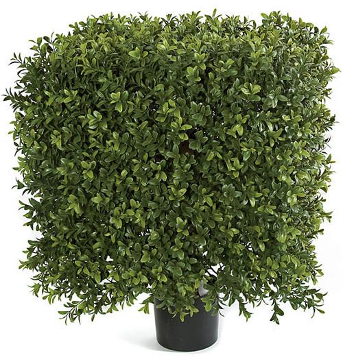 16 Inches x 21 Inches Medium UV Boxwood Square Topiary