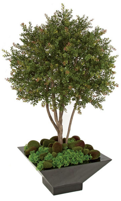 4 Foot UV Wintergreen Boxwood Shrub
