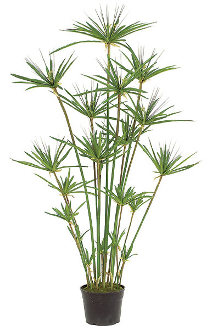 4 Foot Papyrus Tree