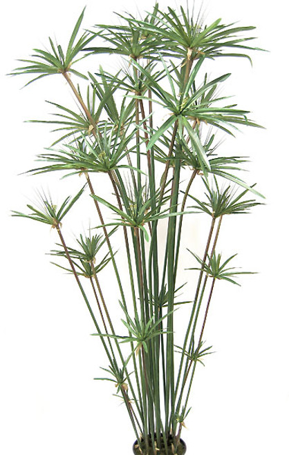 6 Foot Papyrus Tree
