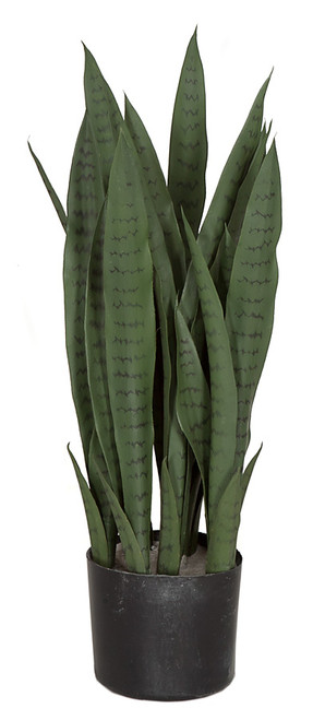 28 Inch Green Sansevieria Plant - IFR or Regular Foliage