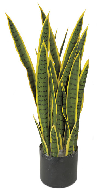 28 Inch Sansevieria Plant - Green/Yellow - IFR or Regular Foliage
