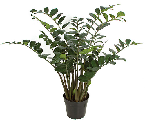 48 Inch Natural Touch Zamia Plant