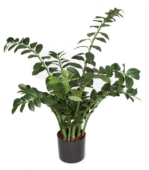 """P-10171043"""" Zamia Plant Weighted Base"""