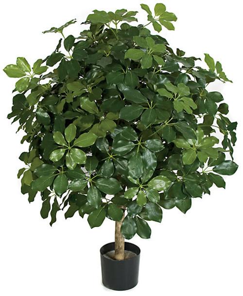 "P-11136045"" Schefflera Tree"