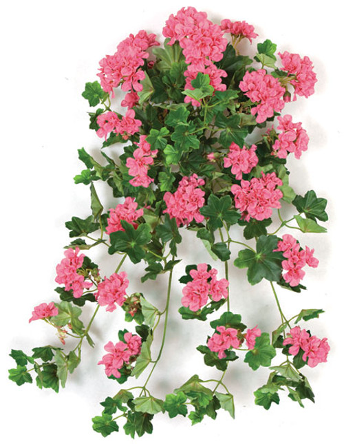 28 Inch IFR Geranium Bush  - Pink or Beauty Color