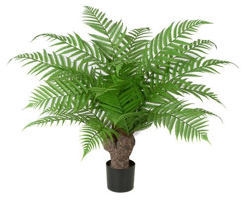 30 Inch IFR Alsophila Fern Tree