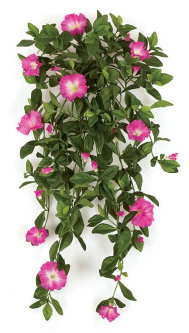 "P-14143034"" Petunia BushFuchsia"