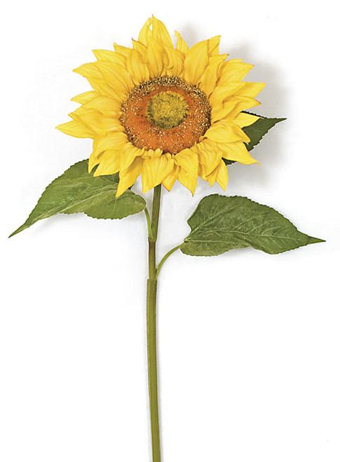 37 Inch Giant Sunflower Spray