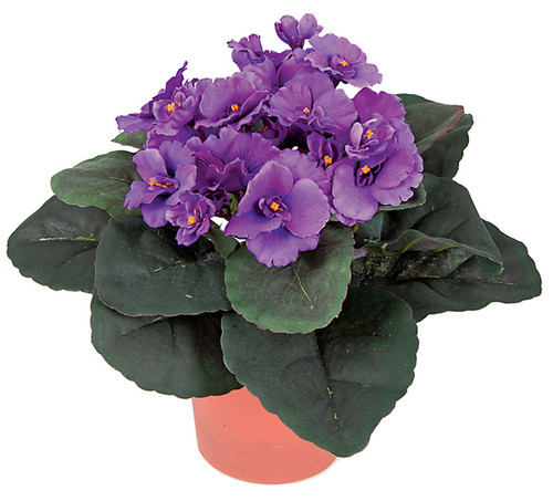 10 Inch Potted African Violet Plant