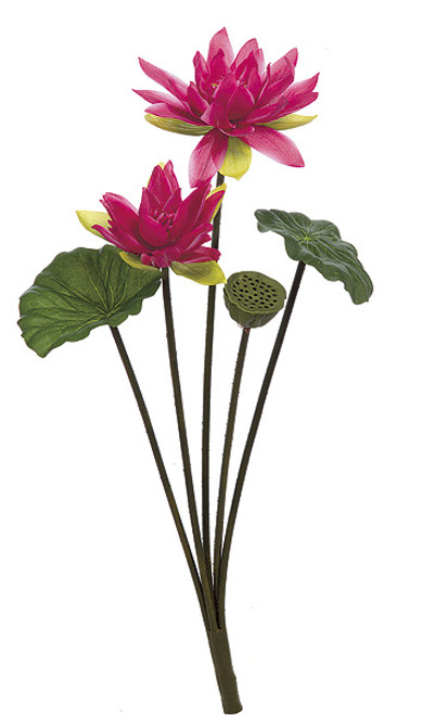30 Inch Lotus Bush - Fuchsia