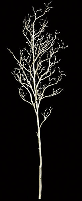 9 Foot White Coral Branch