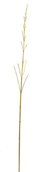 "A-6094046"" Plastic Bamboo TwigBeige"