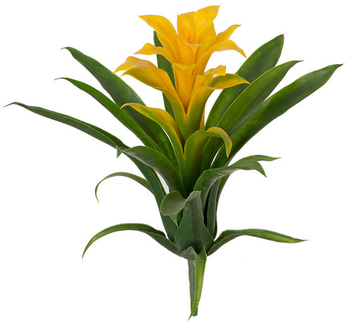 12 Inch Guzmania Plant - Red or Yellow