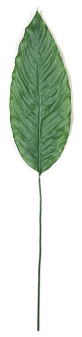 "PR-8716148"" Spathiphyllum"