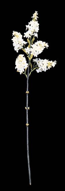"""P-746128"""" Wild LilacCream/White"""