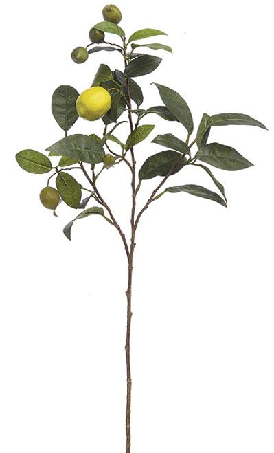 """P-5020028"""" Lemon Branch"""
