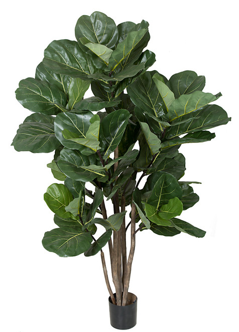 68 Inch Fiddle Leaf Tree - Regular or IFR