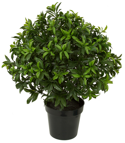 "AUV-16040029"" UV Sweet Bay Topiary"