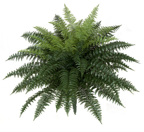 34 Inch x 26 Inch Large Ruffle Fern made for Outdoor Use