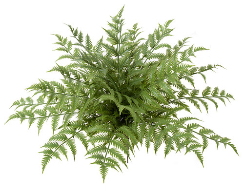30 Inch Outdoor Fade Resistant Woodwardia Fern