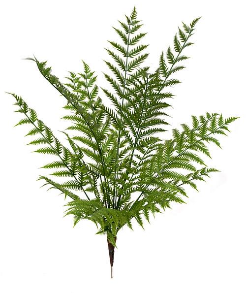 46 Inch Outdoor Woodwardia Fern