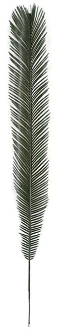 """A-1080548"""" Cycas Palm Branch"""