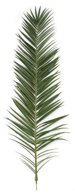 75 Inch IFR Phoenix Palm Frond - Light or Dark Green