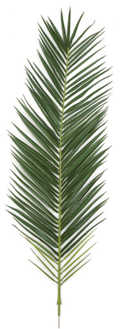 59.5 Inch IFR Phoenix Palm Frond - Light or Dark Green