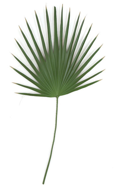 48 Inch PVC Washingtonia Palm Branch (sold by piece)