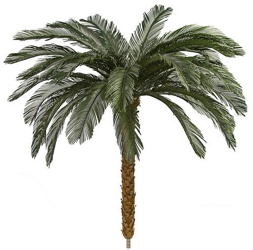 4.5 Feet, 5.5 Feet, 7.5 Feet, 8.5 Feet Tall x 68 Inch Width - Polyblend Cycas Palm Trees