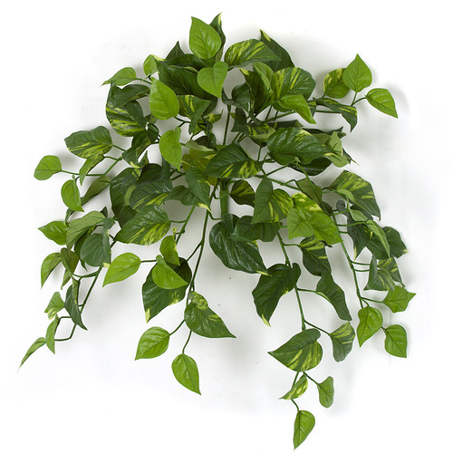 "24"" Pothos Bush Fire Retardant"