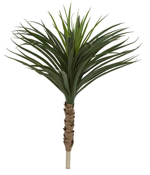 3' Outdoor Yucca PlantBare Stem