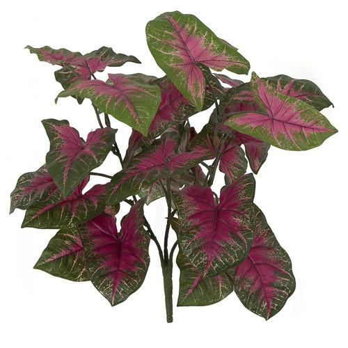 16 Inch FR Syngonium Bush - Pink or Green