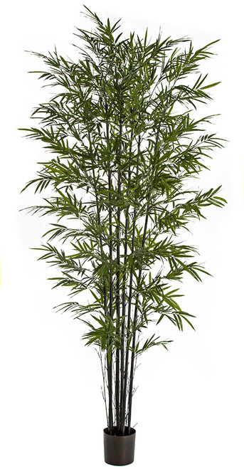 W-170090 9' Bamboo Palm with Black Canes