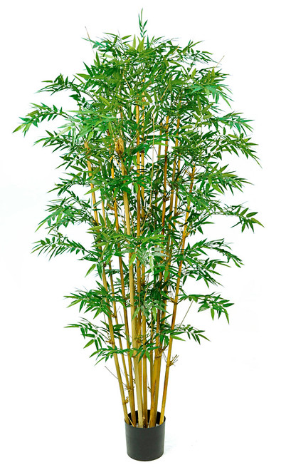 7 Foot Royal Bamboo Tree