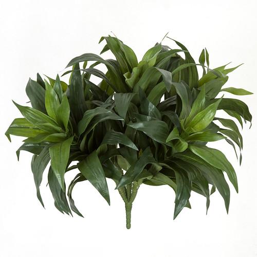 "PR-160710 13"" Dracaena Fragrans Plants x 5"