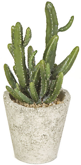 12.5 Inch Potted Mini Cactus Plant in Weathered Pot