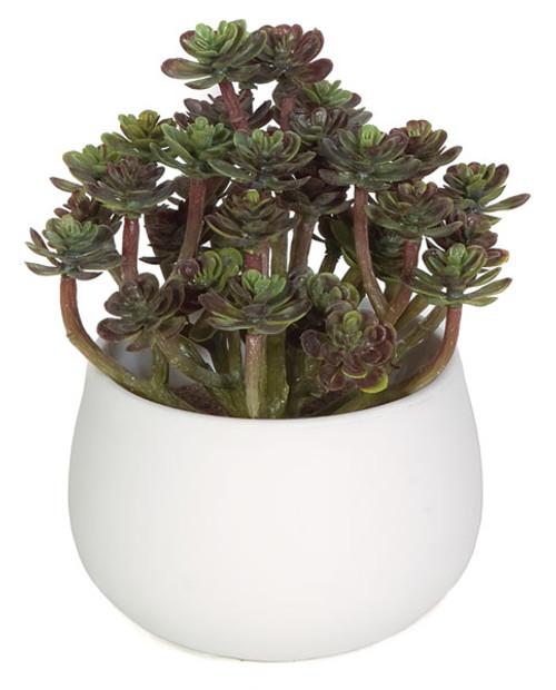 "A-1007906"" Potted Echeverias in White Pot"