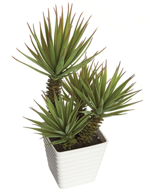14 Inch Potted Yucca Plant
