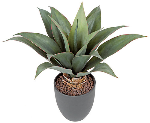 "14"" Potted Agave Plant"