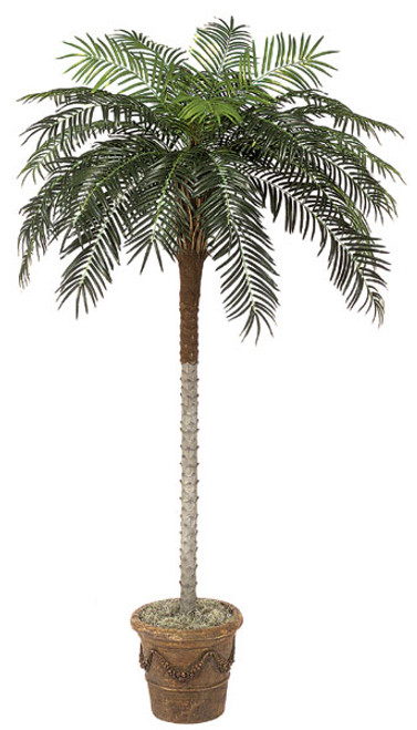 P-25138.5' Phoenix Palm TreeDecorative Pot Sold Separately