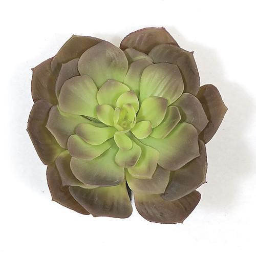 7 Inch Purple Echeveria