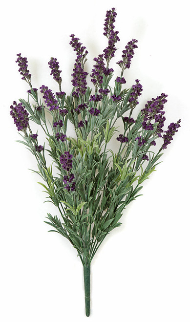 24 Inch Dark Purple Lavender Bush