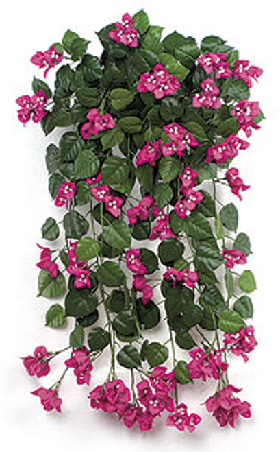 36 Inch Fire Retardant Bougainvillea Bushes in 6 Colors - Red, Beauty, Purple, Peach, Yellow and White