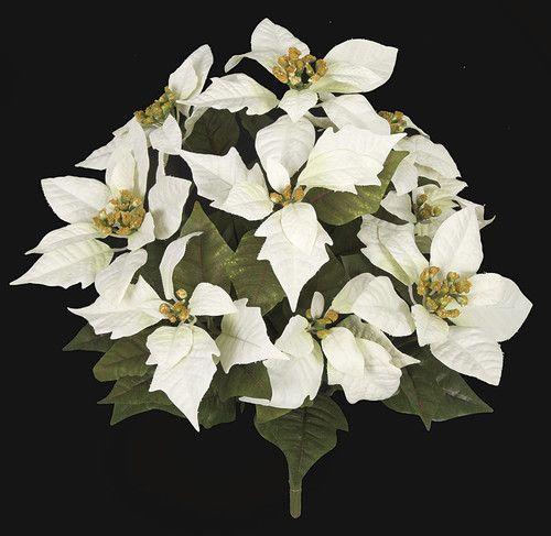 14 Inch Cream/White Poinsettia Bush