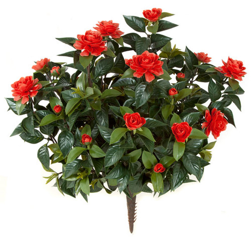 """A-073R28"""" Outdoor Red Gardenia Bush"""